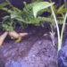 《テラリウムの植物1》