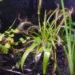 《テラリウムの植物2》